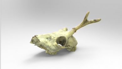 Photo of Threeding.com and Artec 3D Add Animal Anatomy Models to 3D Printing Marketplace