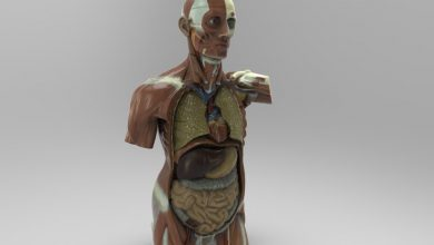 Photo of Threeding Unveils Accurate and Affordable Anatomical 3D Models for Education
