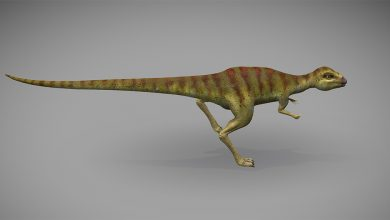 Photo of Deakin University Project Uses VR and 3D Printing to Interact with Dinosaurs (3D Animation Model)