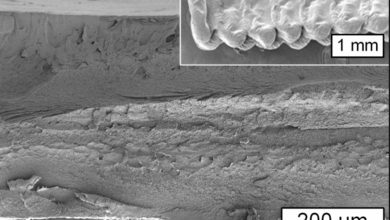 Photo of MIT Researchers Are 3D Printing with Cellulose