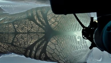 Photo of Will the New Alien: Covenant Movie Be as Good as the 3D Printing in this Teaser?