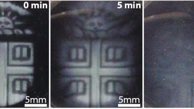 Photo of Brown University Researchers Develop 3D Printed Biomaterials that Degrade On-demand