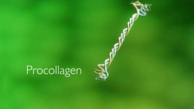 Photo of CollPlant Closes $5M Financing Round to Advance rhCollagen Bioinks Production