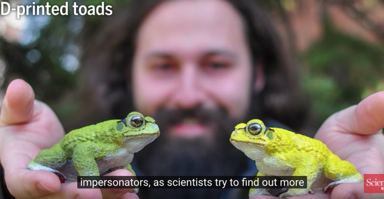 Photo of Scientists are using a 3D printed toad to study its mating behavior