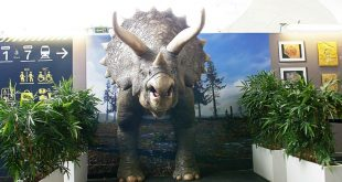 Life-size, 3D printed triceratops causes a stir in Paris | Video