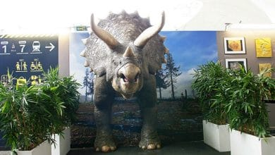 Photo of Life-size, 3D printed triceratops causes a stir in Paris   Video