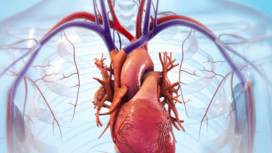 Photo of BIOLIFE4D demonstrates ability to bioprint human cardiac tissue patch
