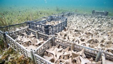 Photo of Emerging Objects technology used to restore underwater corals