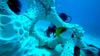 Photo of World's largest 3D printed coral reef installed at Maldives island resort