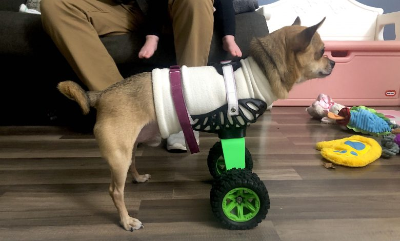 Bionic Pets animal prosthetics