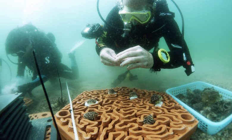 Photo of HKU architects and marine scientists co-develop novel 3D printed reef tiles