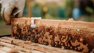 Bee Hero's smart beehives are created by placing printed sensors close to the honeycomb.