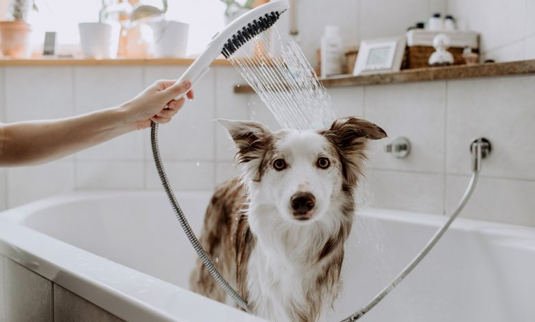 The Hansgrohe Furly dog shower at work.